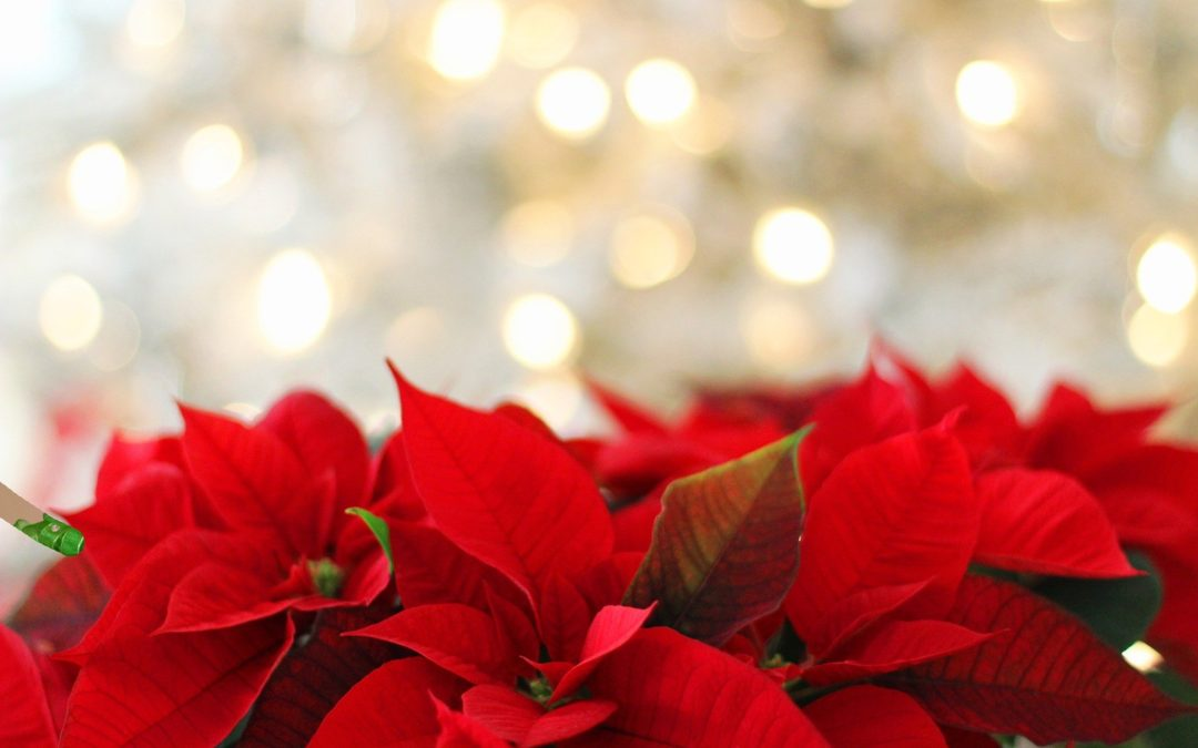 Order your Christmas poinsettias in memory or in celebration of friends or loved ones
